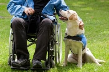 honden zijn heel behulpzaam en goed voor mensen met een beperking
